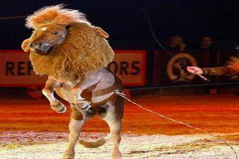 اسبی که شیر شد! + عکس