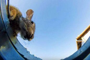 دوربین مخفی ای از آب خوردن حیوانات / فیلم