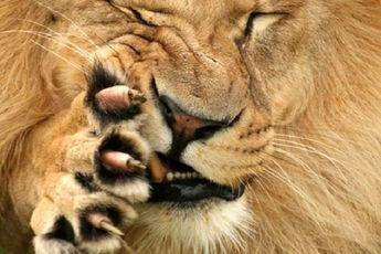 حیوانات چگونه درد را حس میکنند / فیلم