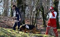 پیدا شدن فرد گمشده در جنگل «شفت»