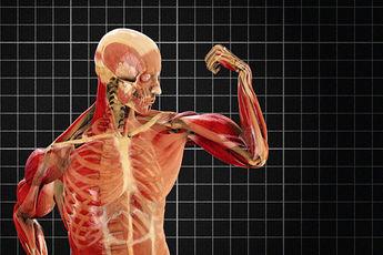 ۵ شگفتی بدن انسان