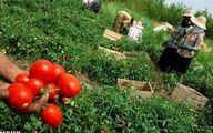 درخواست ۱۶۳ نماینده از رئیس جمهور برای حل مشکلات کشاورزان استان کرمان