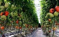 توصیه های هواشناسی کشاورزی برای هفته پایانی اردیبهشت