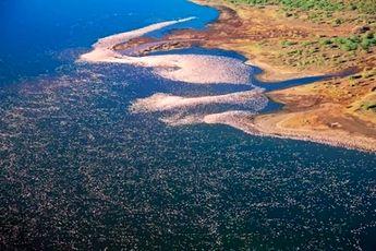 سواحل فلامینگوهای صورتی + تصاویر