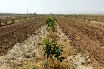 کشاورزی باید با شرایط اقلیم سازگار باشد