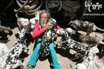 """"""" ۱۰۱ سگ خالدار """" در دنیای واقعی! + عکس"""