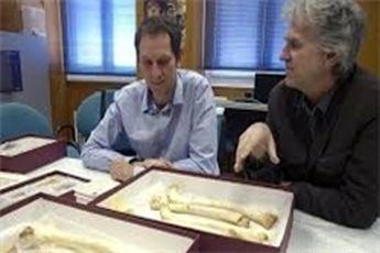 کشف فسیل ۴۰۰ هزار ساله انسان