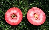 سیب ترشو سیبی که درون آن سرخ است