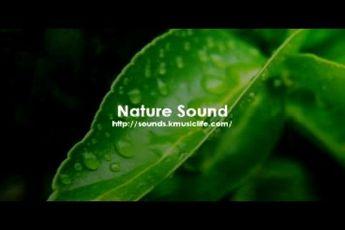 صداهای طبیعت در یک اپ + دانلود