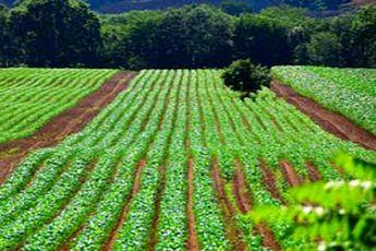 ساخت و ساز در زمین های کشاورزی بدون مجوز ممنوع است